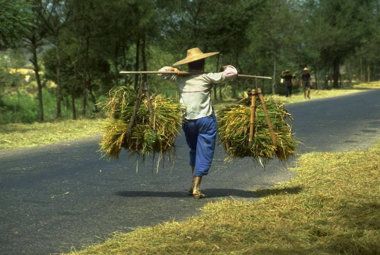 Farmwork.jpg (156490 bytes)
